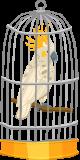 peroquet en cage